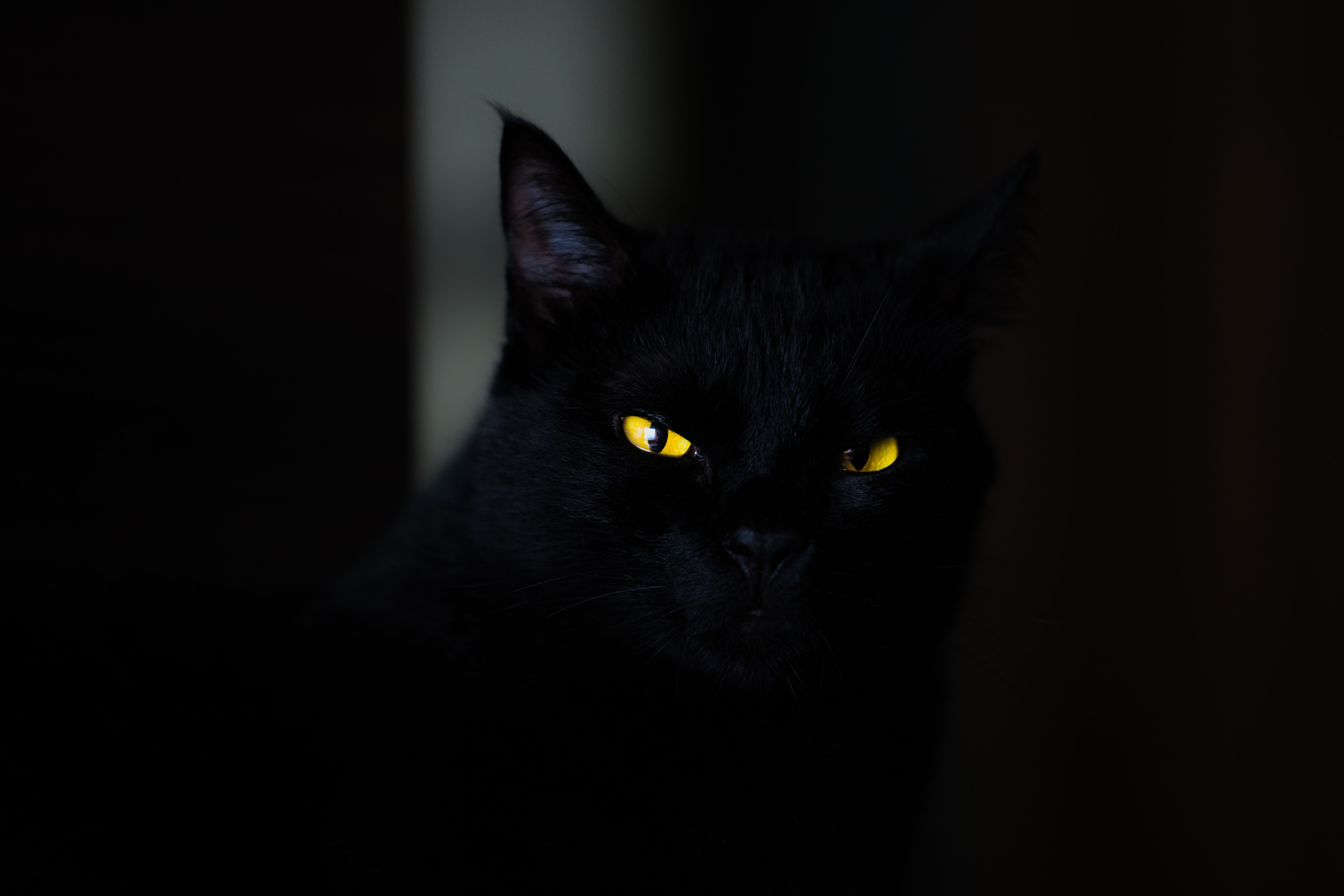 ScaryCat